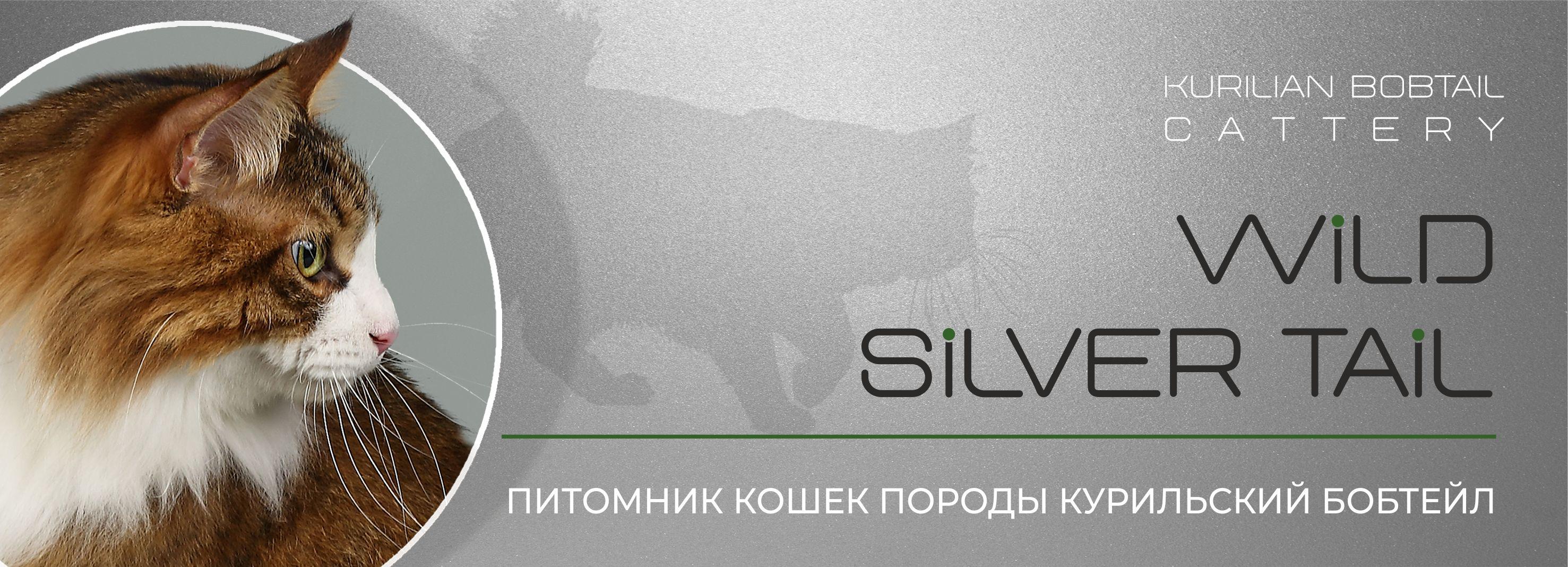 Питомник курильских бобтейлов Wild Silver Tail