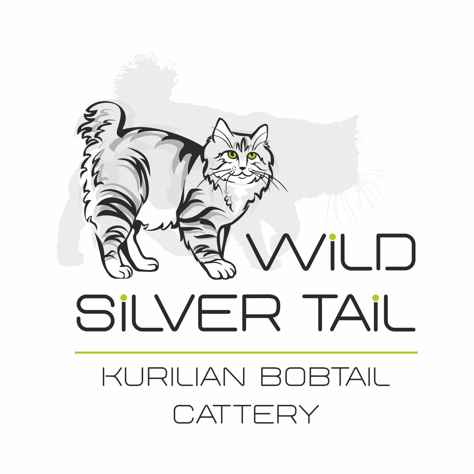 Wild Silver Tail Питомник курильских бобтейлов